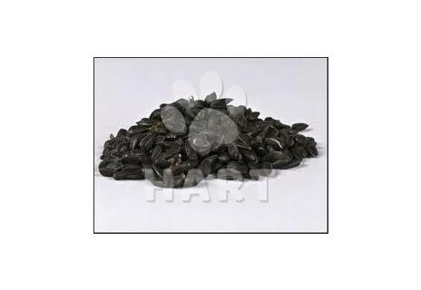 Slunečnice černá VÁŽENÁ 1kg