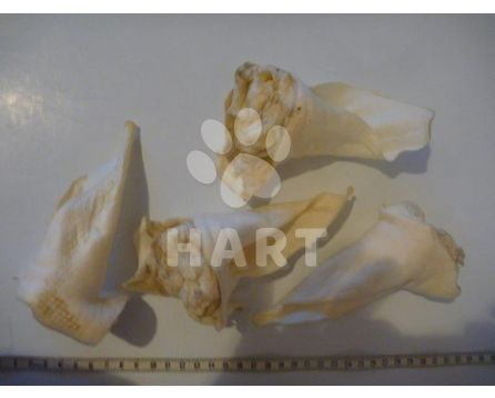 Srnčí ucho sušené(extrudované) bílé, přírodní   1ks
