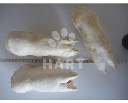 Vepřová noha sušená(extrudovaná) 1ks