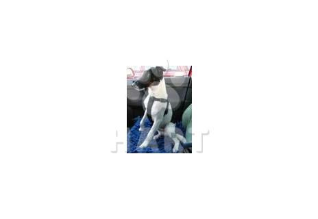 Postroj pro psa do auta XS (20-50cm obvod hudníku)