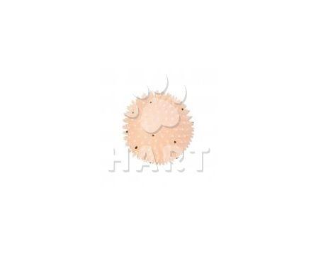 Ježek míč gumový fosfor.svítící ve tmě pískací, prům.cca10 cm TRIXIE