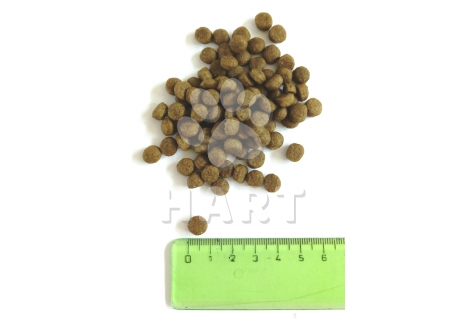 PETKULT MINI ADULT Probiotics  1kg