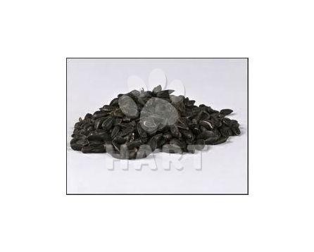 Slunečnice černá ORIG.BALENÍ 10kg