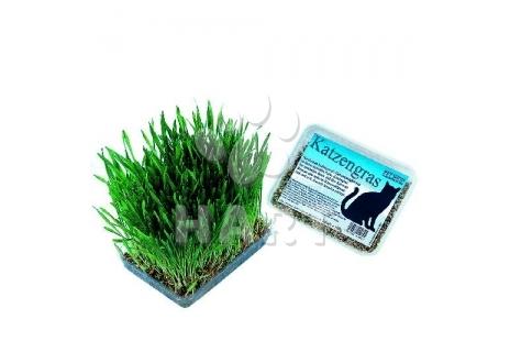 Tráva pro kočky krabička plastová, zn. Nobby 100g