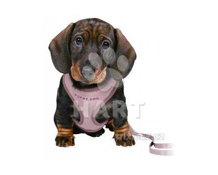 JUNIOR puppy souprava, měkký postroj 26-34cm/10mm + vodítko 2,00m/10mm - světle fialová   1ks